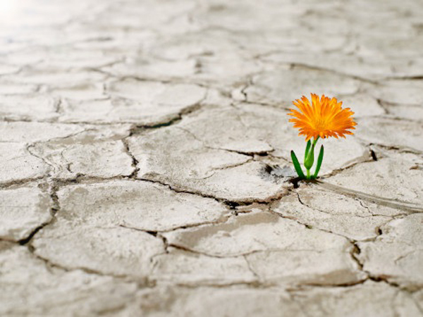 Esperanza - Flor - Desierto