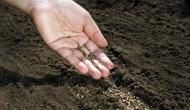 Planta semillas depensamientos