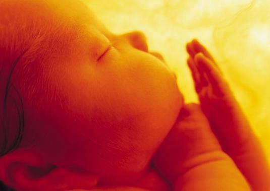 bebe vientre materno