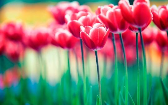 importancia-de-las-flores