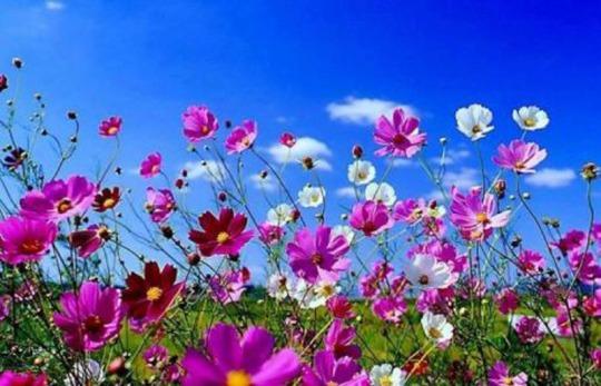 mensaje-canalizado-flores