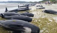 Los medios lloran la muerte de cientos de ballenas, ignoran la muerte de miles de bebésabortados