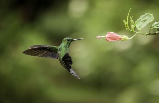 Cuanto-vive-un-colibri.jpg