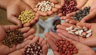 Las semillas requierentiempo