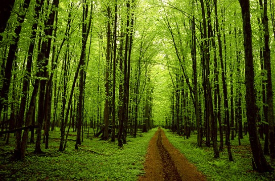 forest_of_trees-565.jpeg