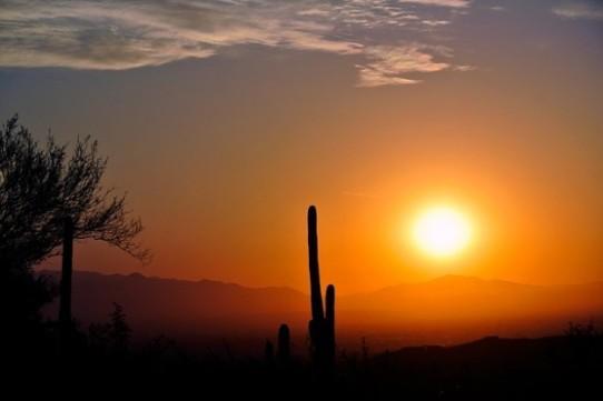 amanecer-arizona-cactus-naturaleza-paisaje-desierto_121-72099
