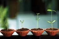 Crece en virtud