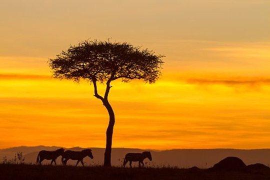 masai_mara_kenia_1000x666.jpg
