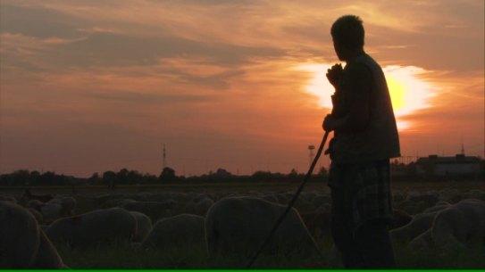 vigilance-bergere-berger-metier-agricole-baton