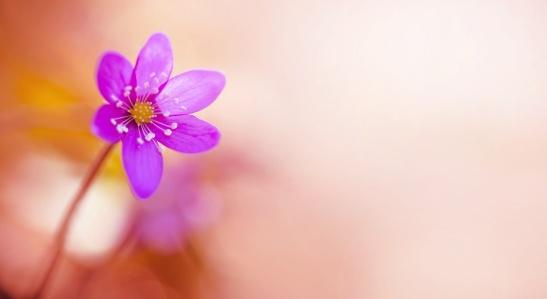flor-paz