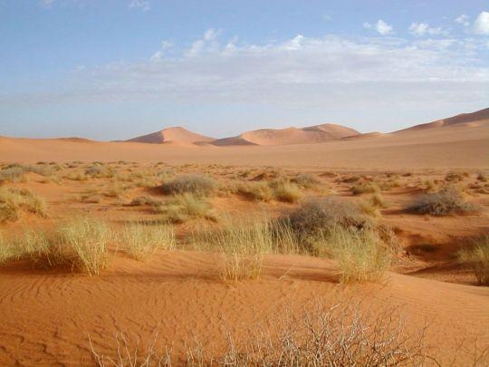 El-Sahara-ecosistema-desertico.jpg
