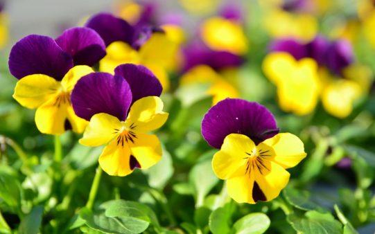 cuidados-de-flores-bonitas.jpg