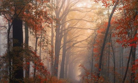 cf10d7539cc61f1e4450f7027cb5c2b8--colors-of-autumn-beautiful-forest