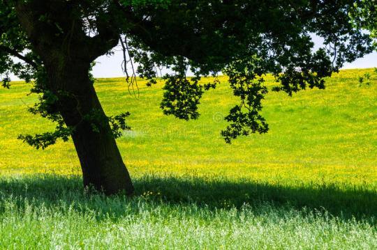 sombra-del-árbol-contra-paisaje-del-verano-73532380.jpg