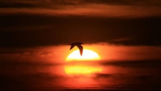 f328_soleil_oiseau