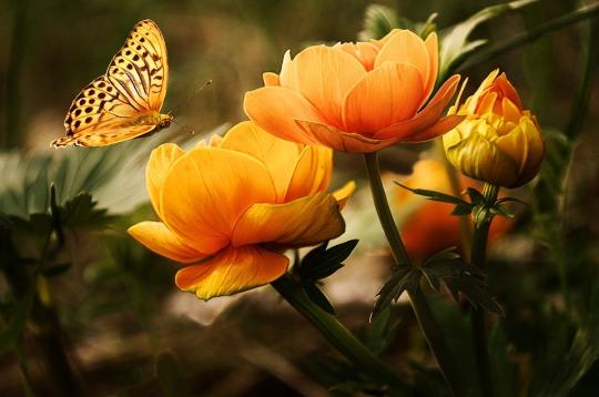 flowers-19830_960_720