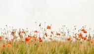 Hogares que florecen